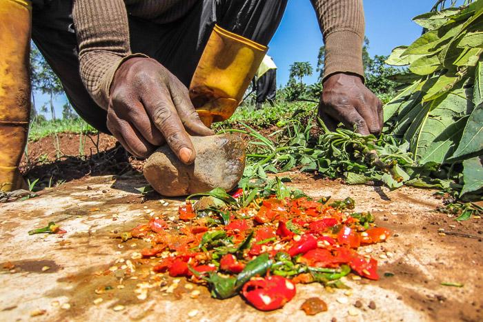 Nyota-Organic-Farming-6436