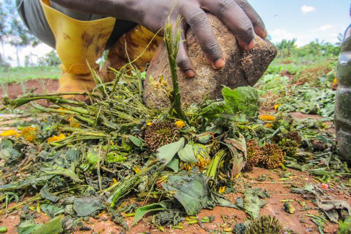 Nyota-Organic-Farming-6461