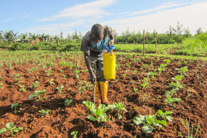 Nyota-Organic-Farming-6521