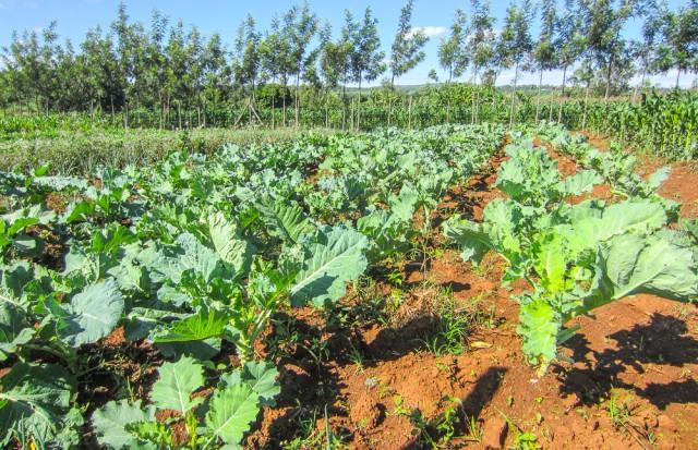 Nyota_organic_farming-6718