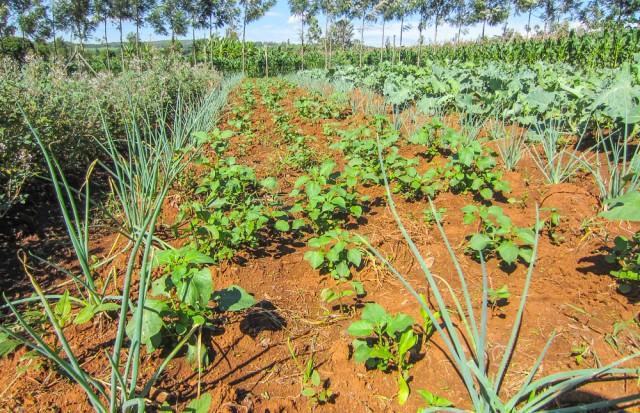 Nyota_organic_farming-6724