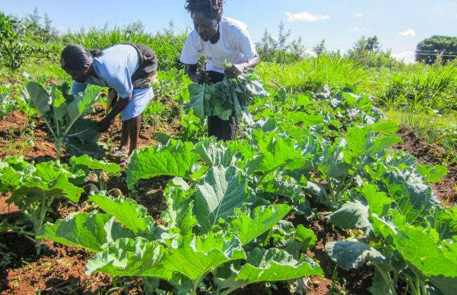 Nyota_organic_farming-6740
