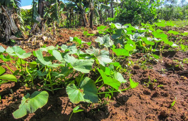 Nyota_organic_farming-6762