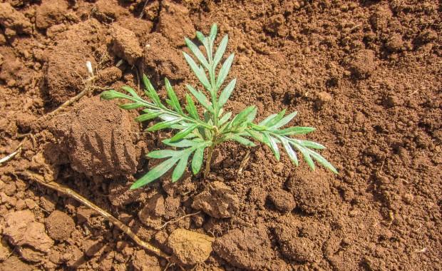 Nyota_Tree-planting-kenya-1293