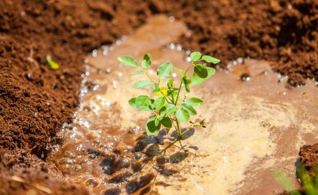 1410_Nyota_Tree_Planting-0521