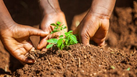 1410_Nyota_Tree_Planting-0558
