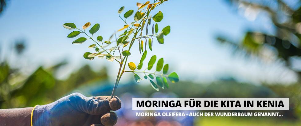 Moringa-Banner-Aktion