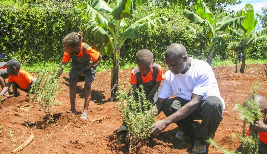 planting Rosemary-2