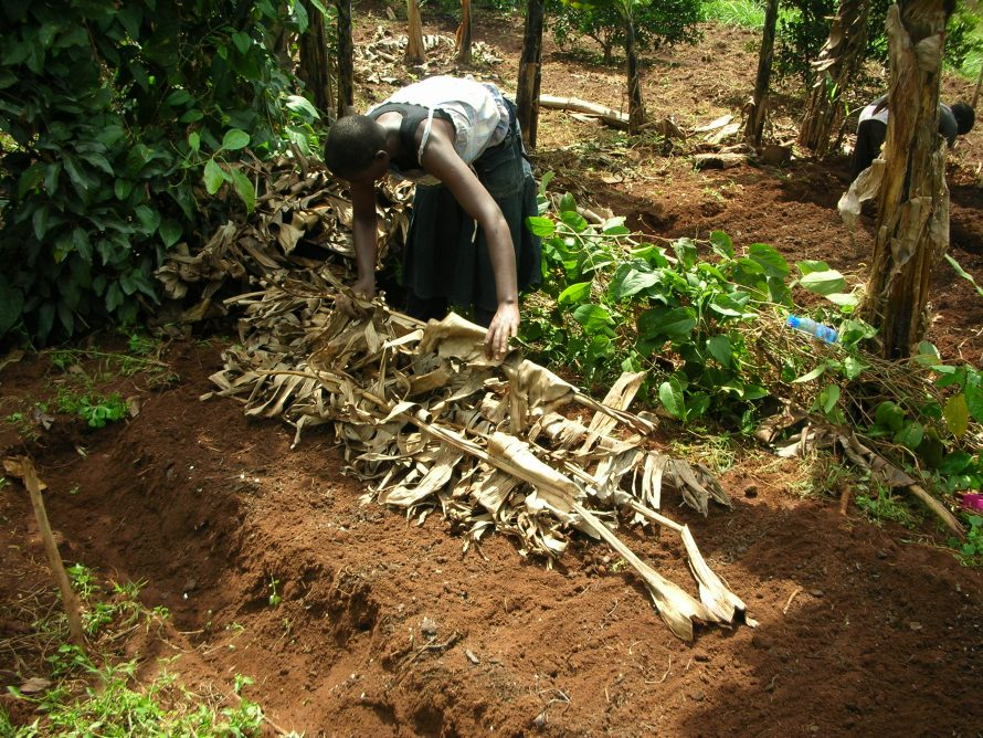 covering-seedbed-for-new-moringa
