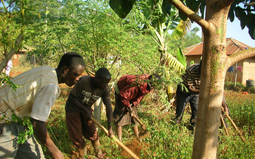 Dürreperiode und Nahrungsmittelkrise Organic Farming